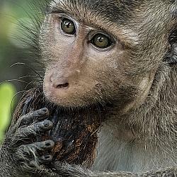 Thức ăn của khỉ