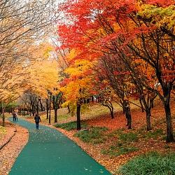 Environment in Korea