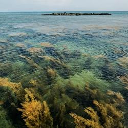 Đời sống sinh vật biển