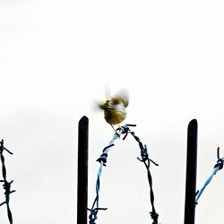 Vũ điệu bên hàng rào