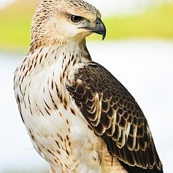 Chim Ở Rừng Quốc Gia Cát Tiên