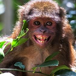 Khỉ Ở Rừng Quốc Gia Cát Tiên