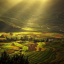 Nắng trên ruộng lúa