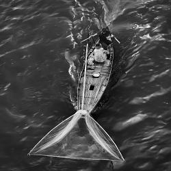 Thuyền cá