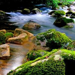 Mạch nguồn của nước