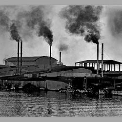 Công nghiệp giết chết dong sông